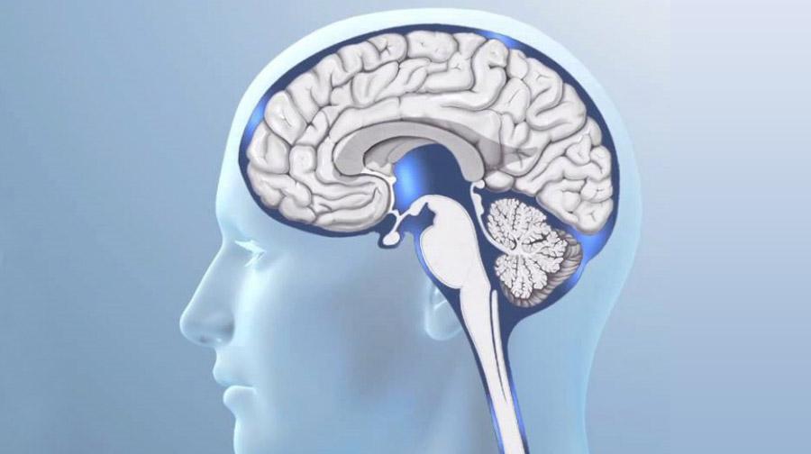 Qué es y cómo funciona el líquido cefalorraquídeo