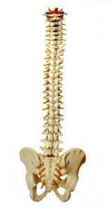 Una caída puede llegar a fracturar una vértebra o causar incluso una hernia discal